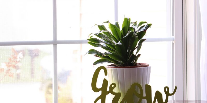 12 Best Air Purifying Plants For Your Home