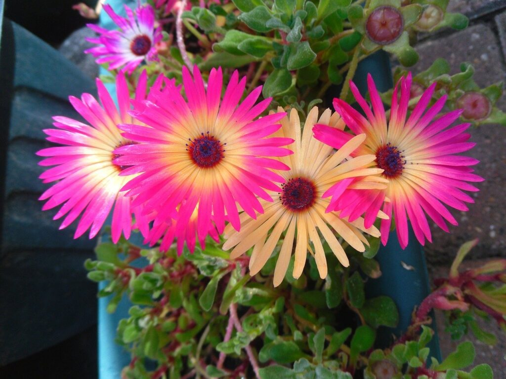 Best Air Purifying Plants for Your Home | Gerbera Daisies