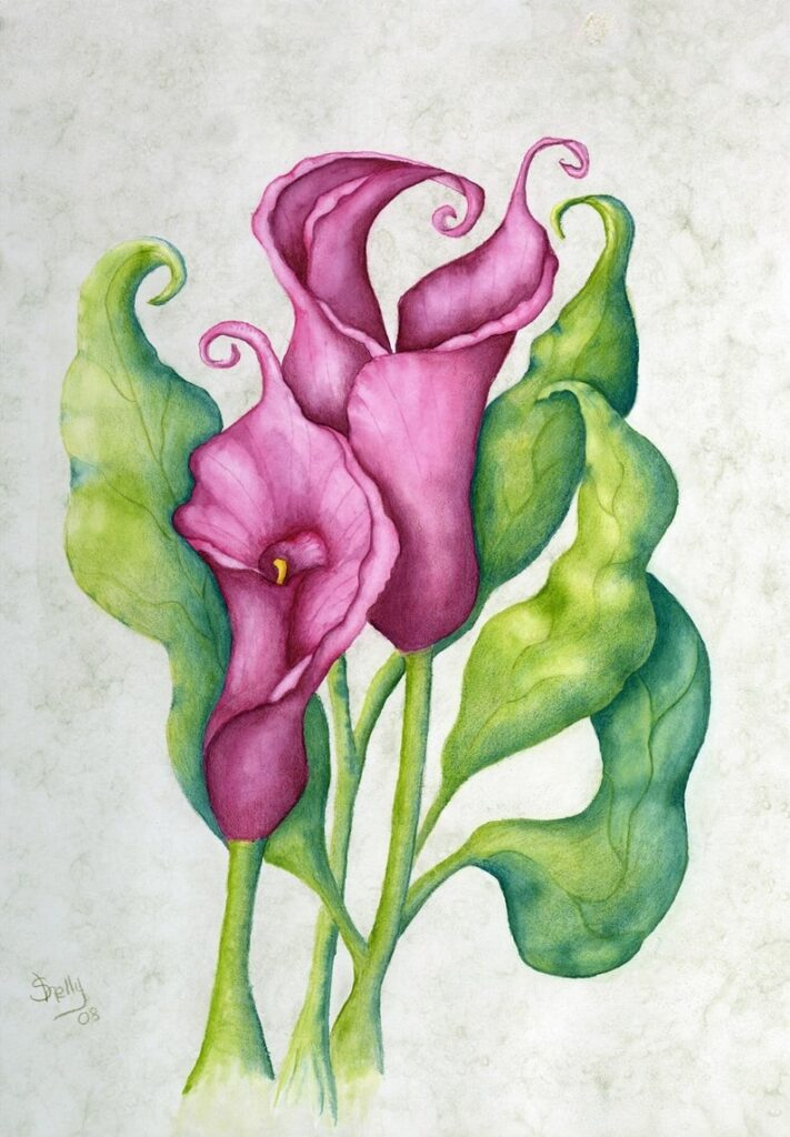 Classic Calla Lilies on Parchment by Shelly Ziska