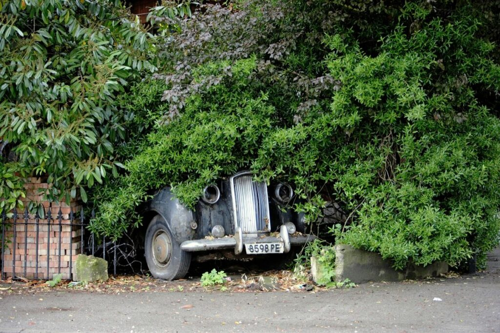 Abandoned Car Buried by Shrubs