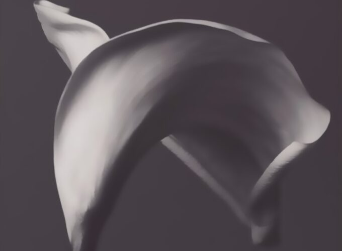 Sensual and Sophisticated Calla Lily Wall Art