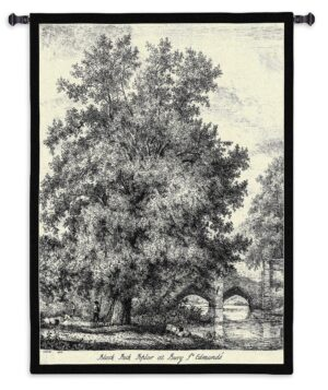 Black Poplar Tree Sketch | Tapestry Wall Hanging | 53 x 40