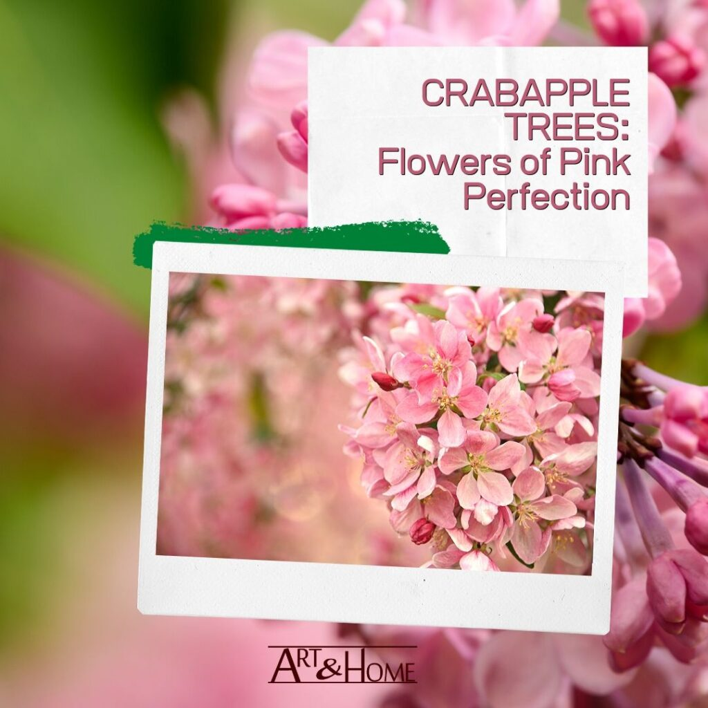 Crabapple Trees - Flowers of Pink Perfection