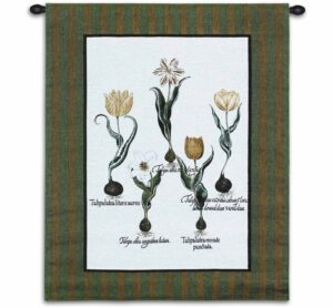 """Tulip Study I 