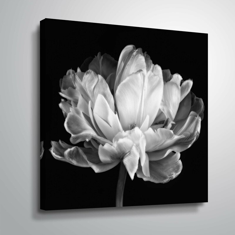 Tulipa Double Black White Photographic Print on Canvas
