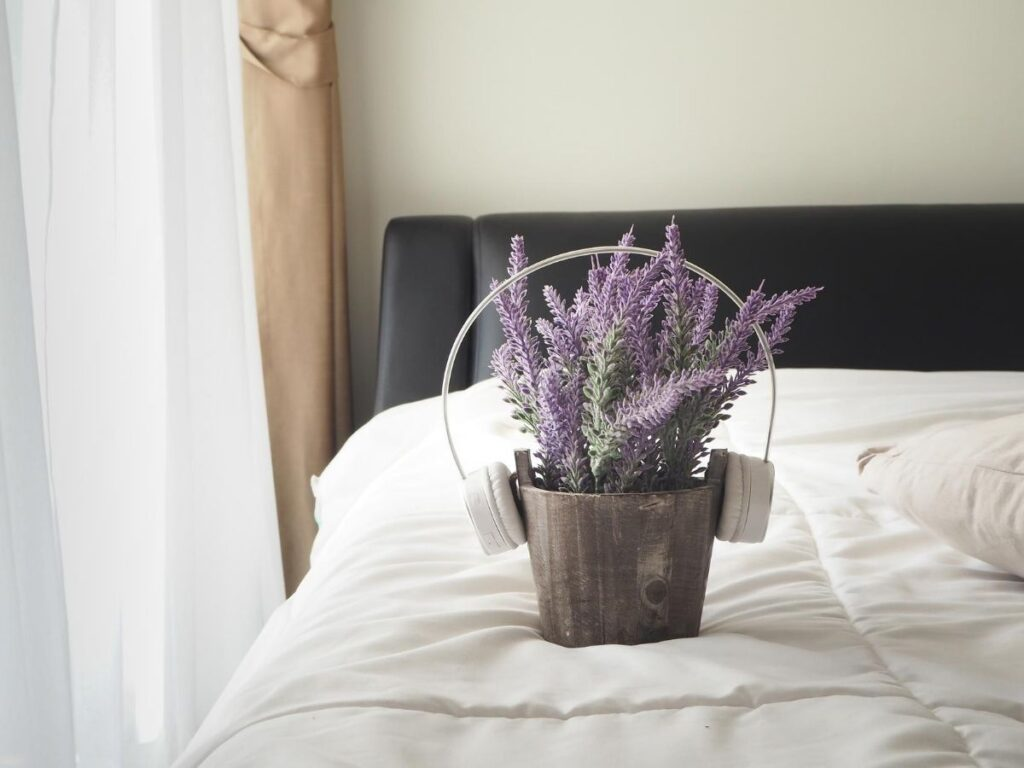 Best Air Purifying Plants for the Bedroom
