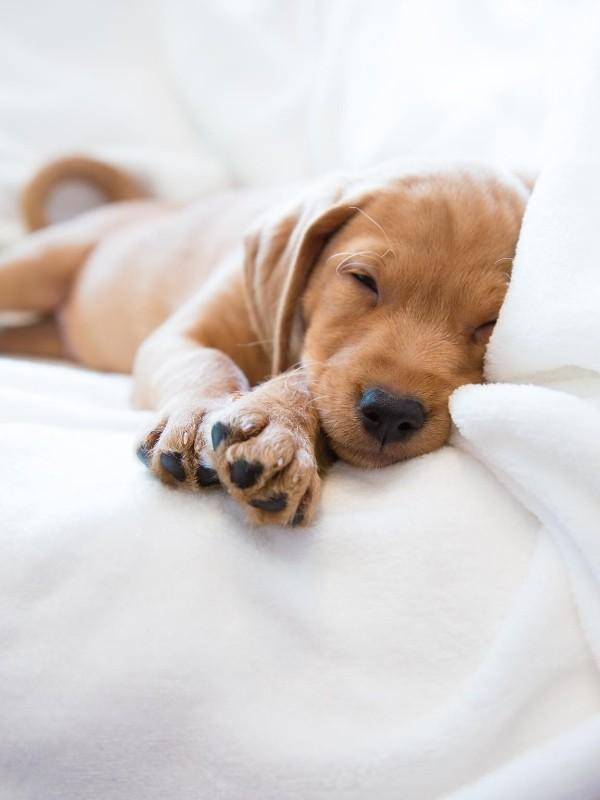 Cute Picture of Puppy Sleeping