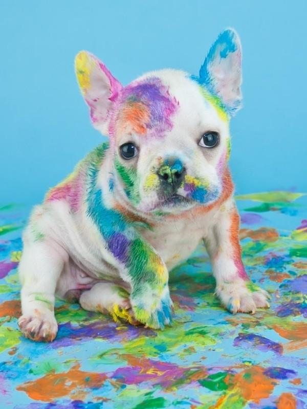 Cute Puppy Covered In Paint