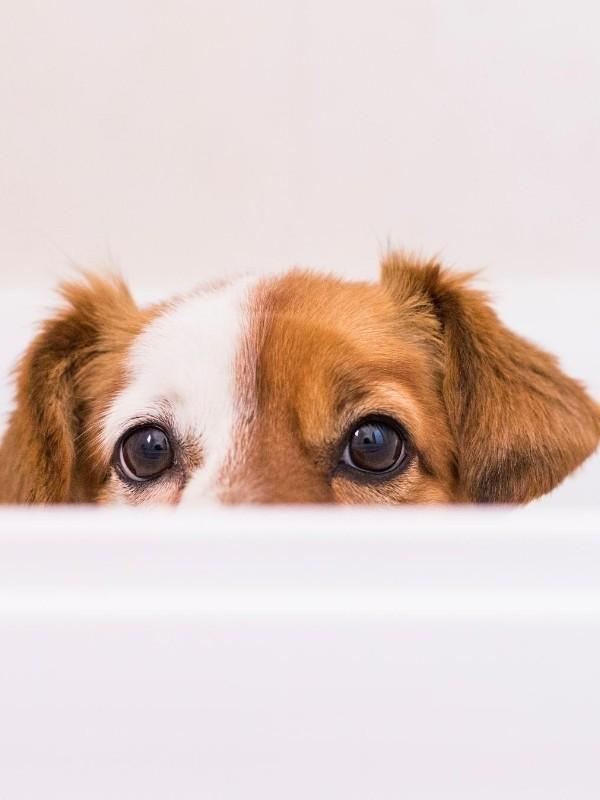 Puppy Peaking Over Side of Bath Tub