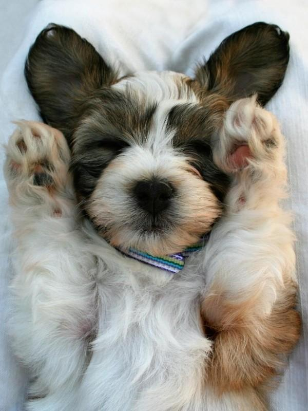 Puppy Sleeping With Paws Up