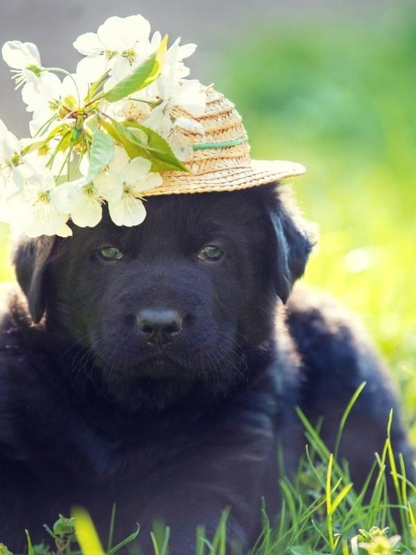 Puppy in a Straw Hat With Flower