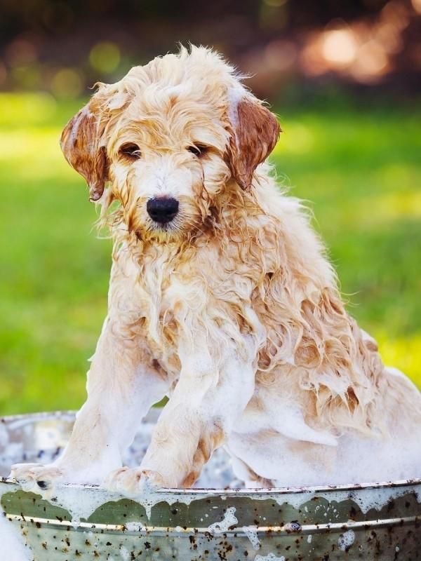 Soapy Puppy in Outdoor Bath