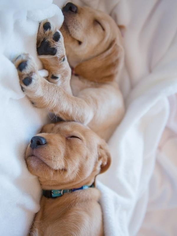 Two Puppies Sleeping Together