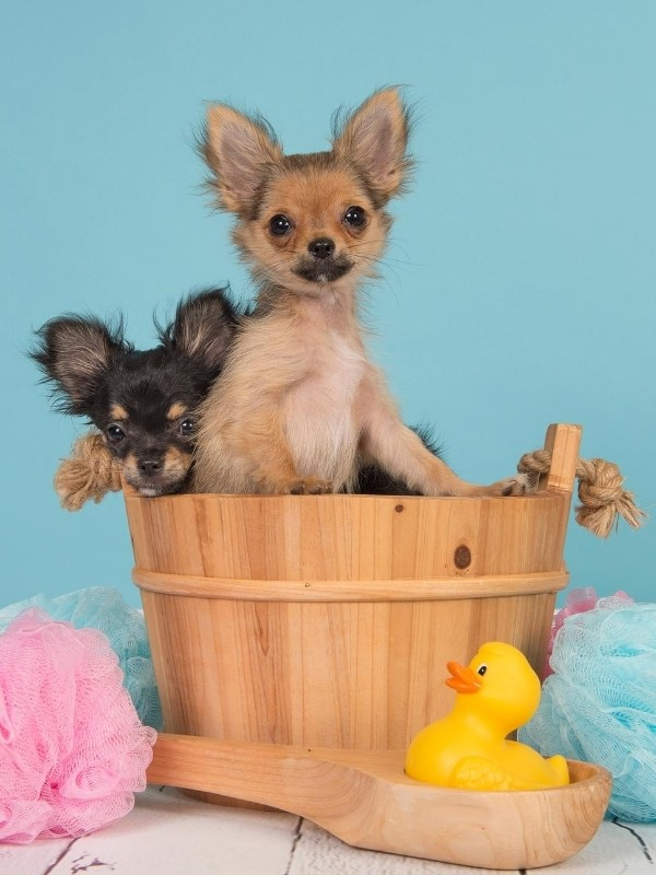 Two Puppies in a Wood Bath