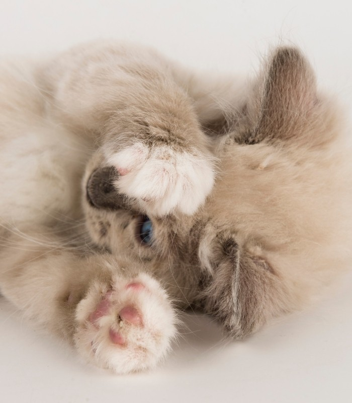 Cute and Cuddly Kitten