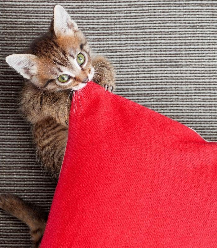 Kitten Caught Playing With Pillow