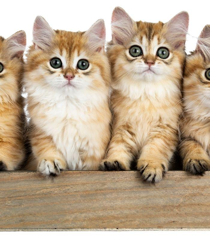 Kittens with Big Eyes