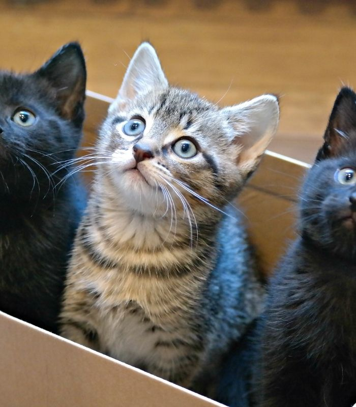 adorable kittens in a box