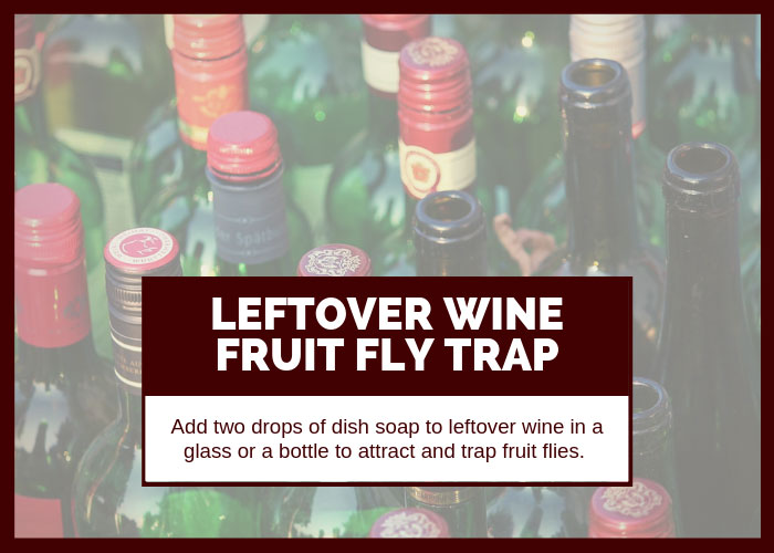 How to Get Rid of Fruit Flies Using Leftover Wine
