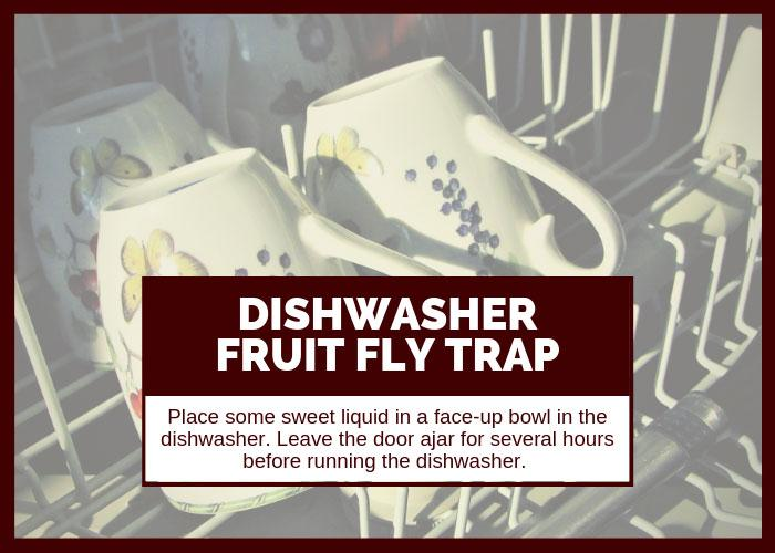How to Get Rid of Fruit Flies Using the Dishwasher