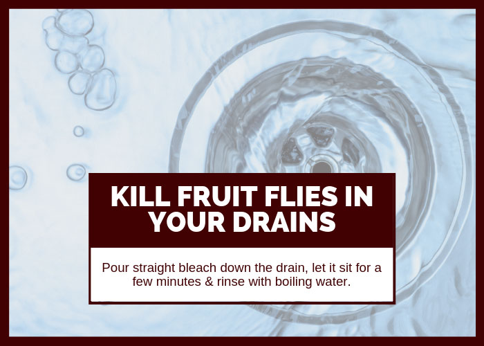 How to Get Rid of Fruit Flies in Drains