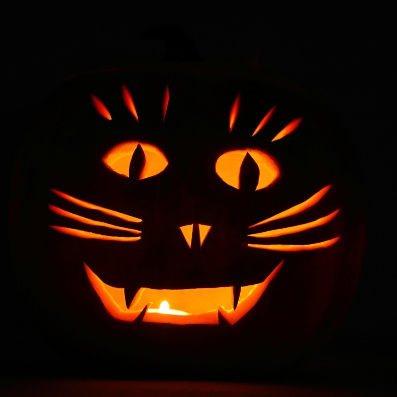 Kitty Whiskers Carved Pumpkin