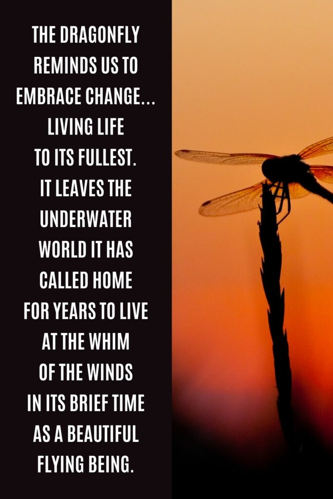 Dragonfly Quote About Change