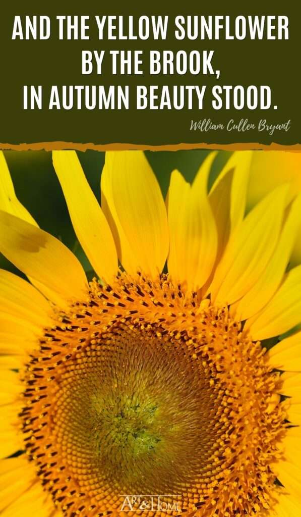 And the yellow sunflower by the brook, in autumn beauty stood. William Cullen Bryant quote