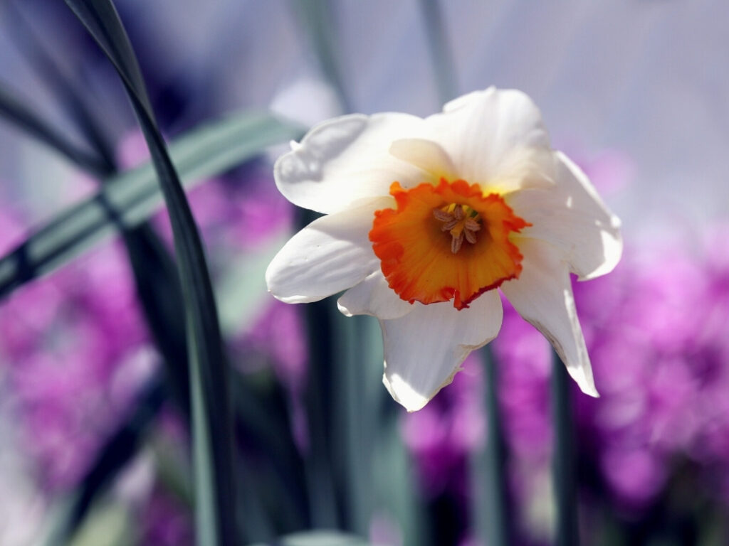 Beauty of Spring Flowers