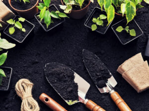 5 DIY Garden Tips to Spruce Up Your Back Yard for Summer