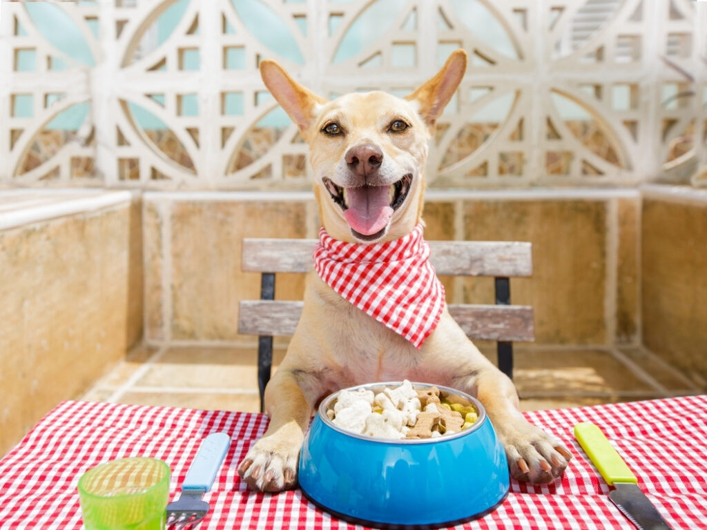 Dog Eating Habits That Cause Stinky Breath