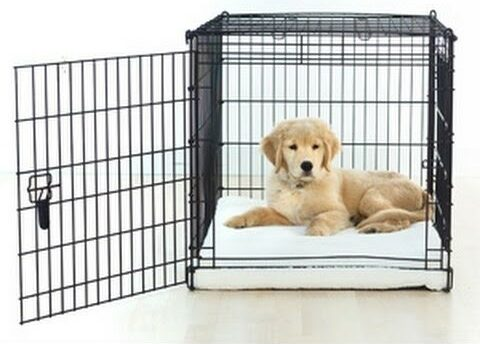 Puppy in Wire Crate