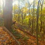 image of Appalachian Trail