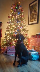 Dog's Christmas Eve