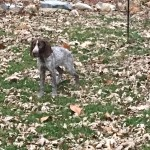 Gypsy puppy