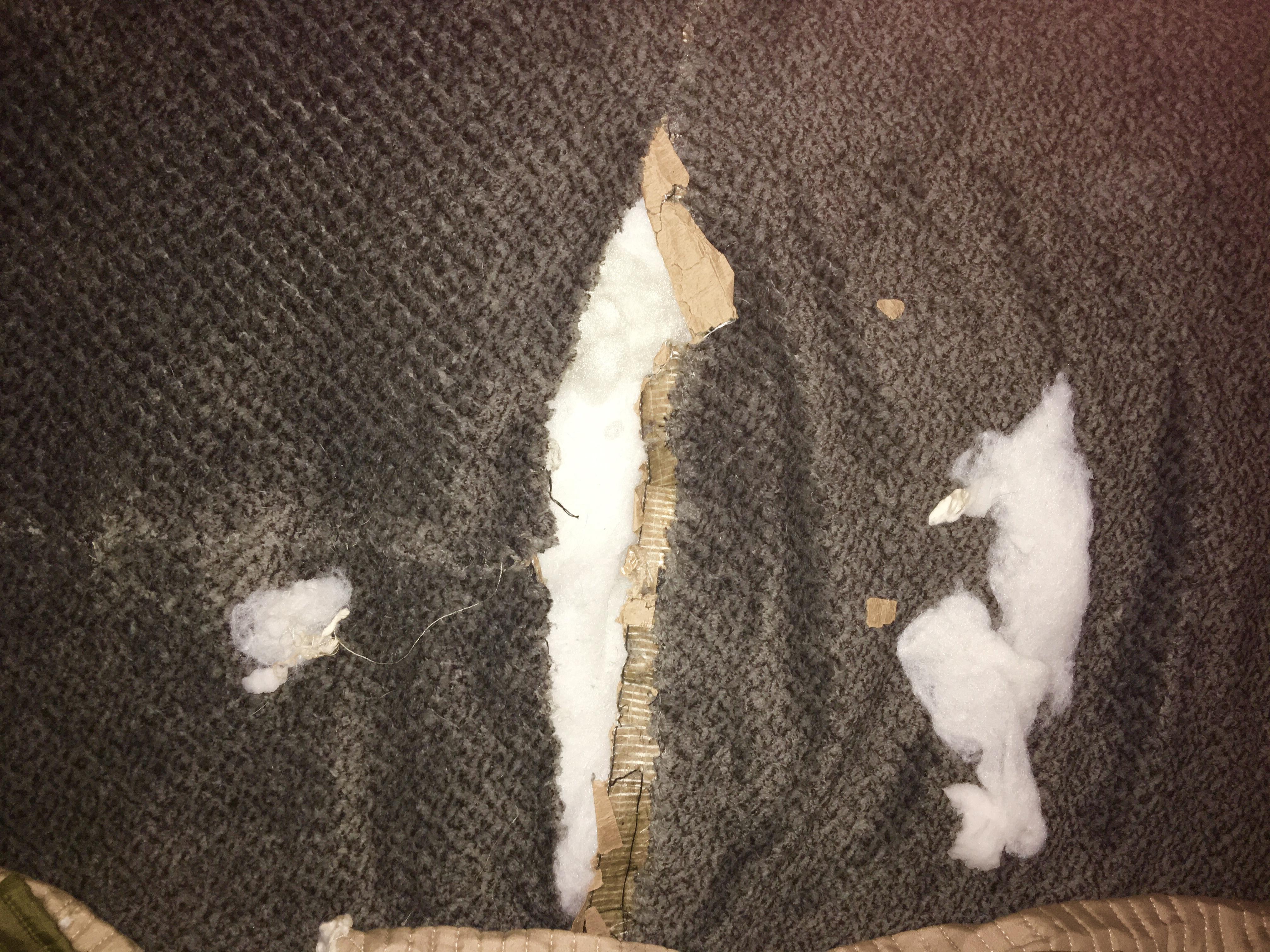 dog destruction