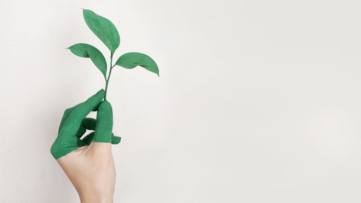Save Money and The Planet Through These Ecological Actions