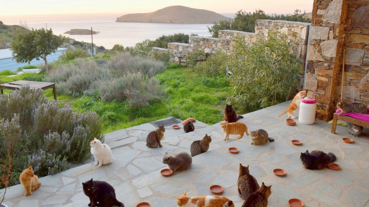 Is This Heaven? Make Money By Chilling on a Greek Island and Take Care of 55 Cats