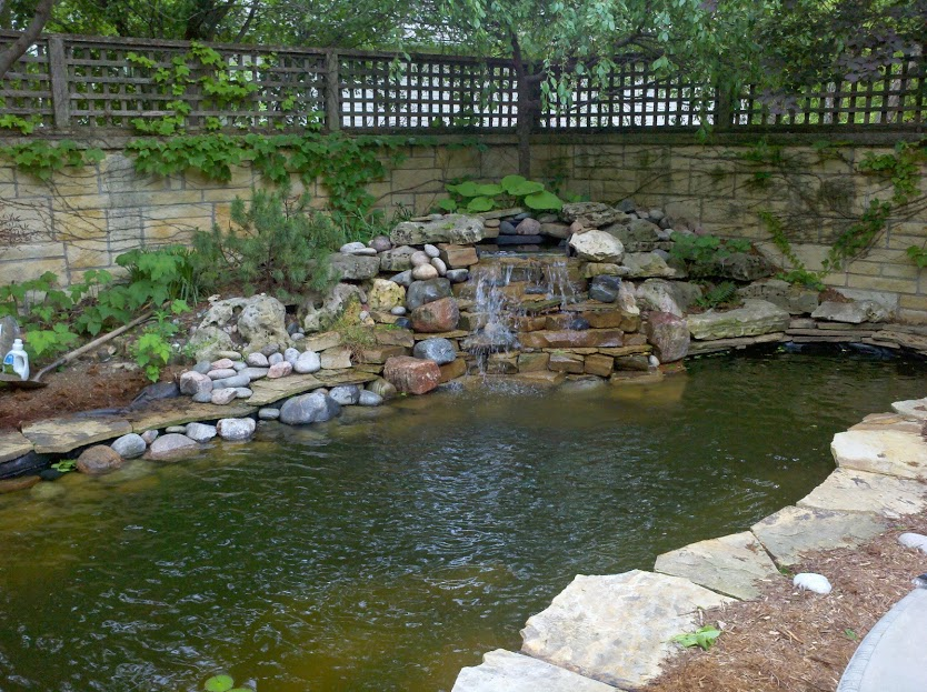 We are your pond experts!