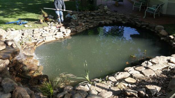 watergarden-pond-construction-new-lilies