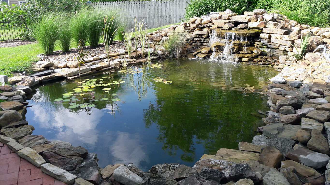 Established watergarden with large waterfall grasses and lilies