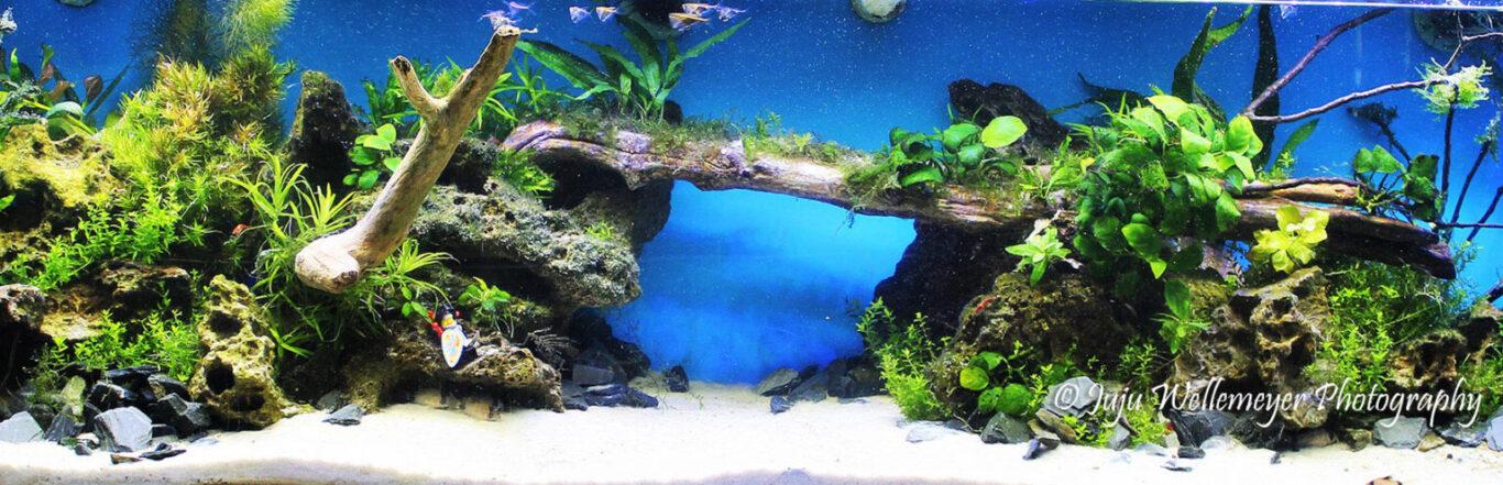 Nature style aquarium