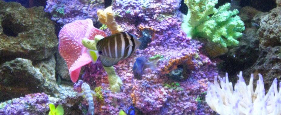 aquarium faux coral reef saltwater volcano