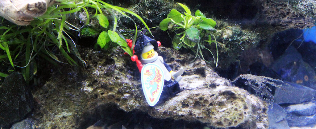 lego-knight-poses-in-aquairum-above-cory-catfish
