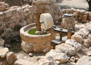 holy land olive press