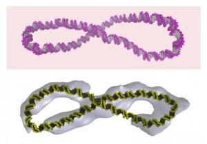 DNA_1___credit_Thana_Sutthibutpong_1