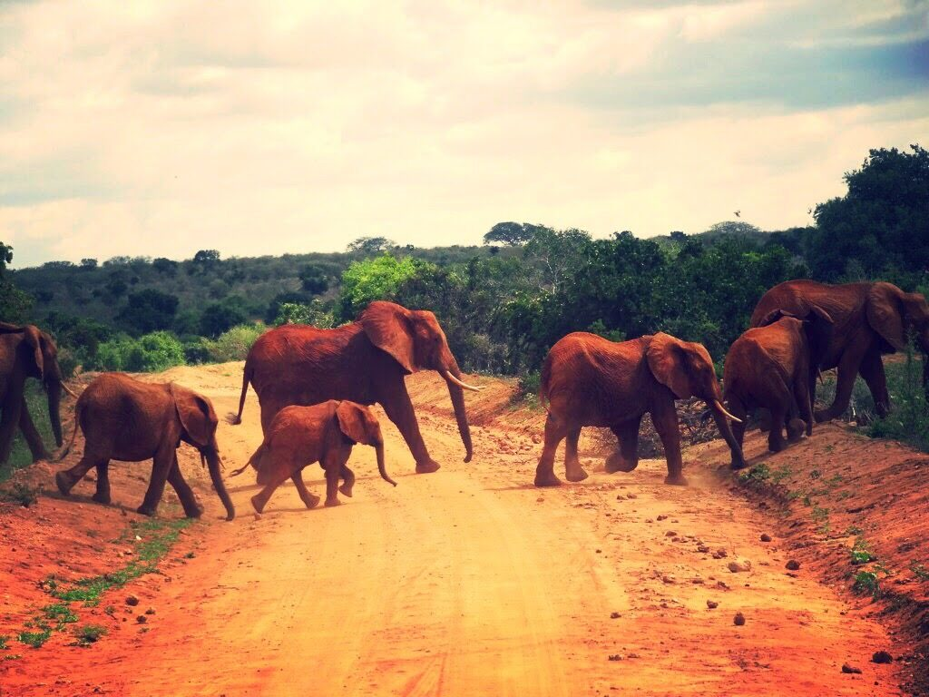 where to visit in kenya tsavo