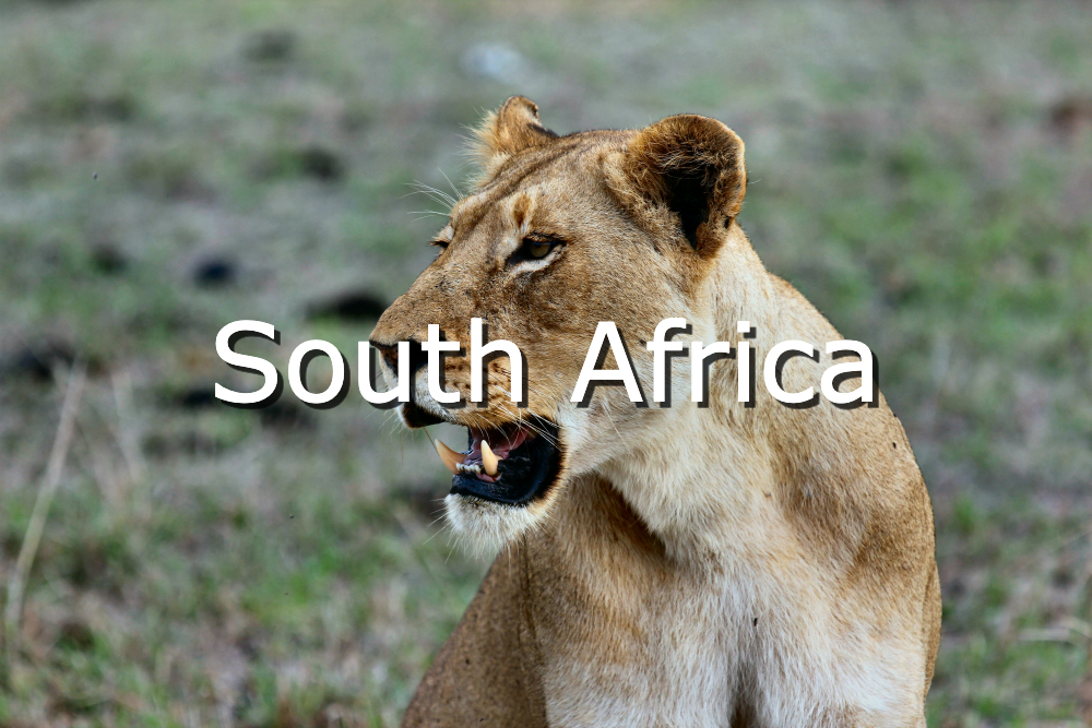 visit south africa for 50 year old