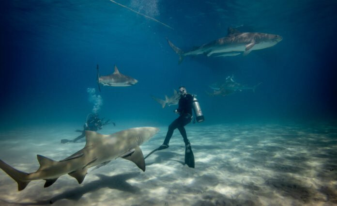 the 5 best places in the world to scuba dive