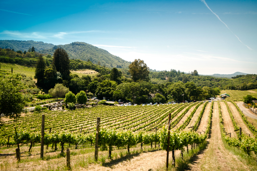 vacation in sonoma
